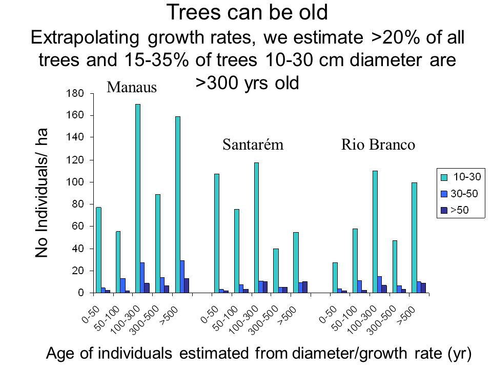 No Individuals/ ha Manaus SantarémRio Branco Trees can be old Extrapolating growth rates, we estimate >20% of all trees and 15-35% of trees 10-30 cm diameter are >300 yrs old Age of individuals estimated from diameter/growth rate (yr)