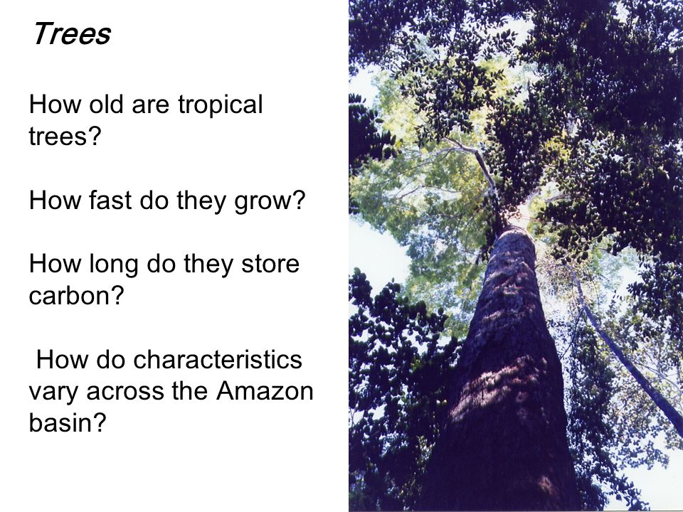 Trees How old are tropical trees. How fast do they grow.
