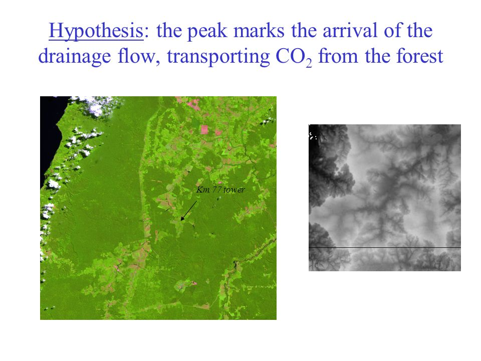 Hypothesis: the peak marks the arrival of the drainage flow, transporting CO 2 from the forest Km 77 tower