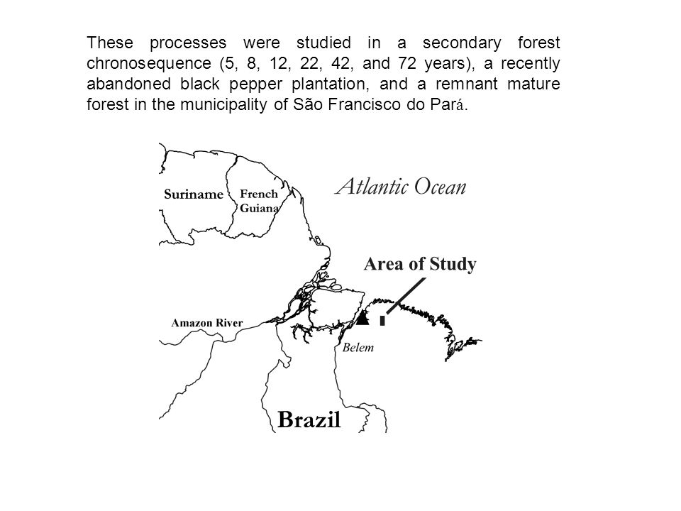 These processes were studied in a secondary forest chronosequence (5, 8, 12, 22, 42, and 72 years), a recently abandoned black pepper plantation, and a remnant mature forest in the municipality of São Francisco do Par á.