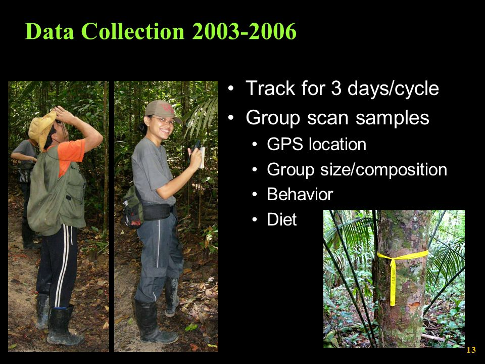 Data Collection 2003-2006 Track for 3 days/cycle Group scan samples GPS location Group size/composition Behavior Diet 13