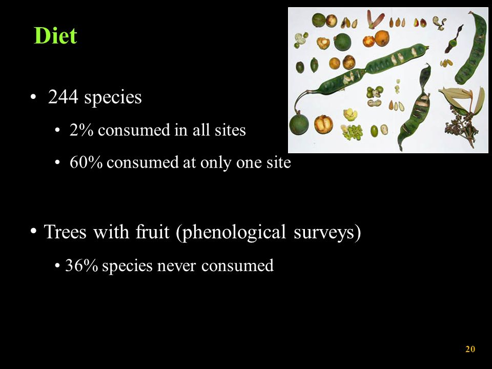 Diet 244 species 2% consumed in all sites 60% consumed at only one site Trees with fruit (phenological surveys) 36% species never consumed 20