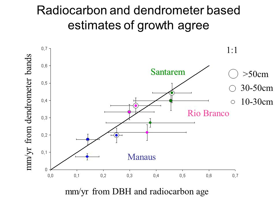 Radiocarbon and dendrometer based estimates of growth agree mm/yr from dendrometer bands mm/yr from DBH and radiocarbon age >50cm 30-50cm 10-30cm Rio Branco Manaus Santarem 1:1