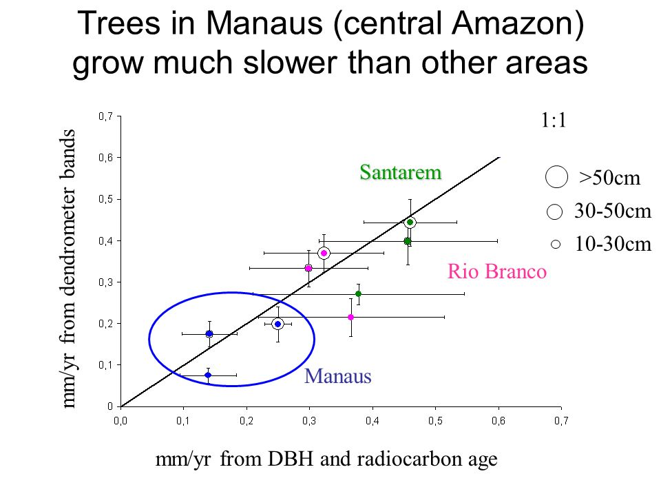 Trees in Manaus (central Amazon) grow much slower than other areas mm/yr from dendrometer bands mm/yr from DBH and radiocarbon age >50cm 30-50cm 10-30cm Rio Branco Manaus Santarem 1:1