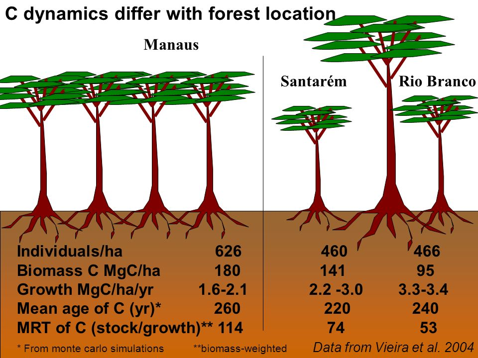 Manaus Santarém Rio Branco Individuals/ha 626 460 466 Biomass C MgC/ha 180 141 95 Growth MgC/ha/yr 1.6-2.1 2.2 -3.0 3.3-3.4 Mean age of C (yr)* 260 220 240 MRT of C (stock/growth)** 114 74 53 * From monte carlo simulations **biomass-weighted Data from Vieira et al.