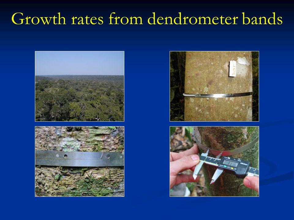 Growth rates vary seasonally with rainfall, though not simply Mean annual growth increment – Manaus 1.7 mm yr -1 Rio Branco 3.8 mm yr -1 Santarém 3.1 mm yr -1 Biomass increment in living trees ~ 2 Mg C ha -1 yr -1 all three sites