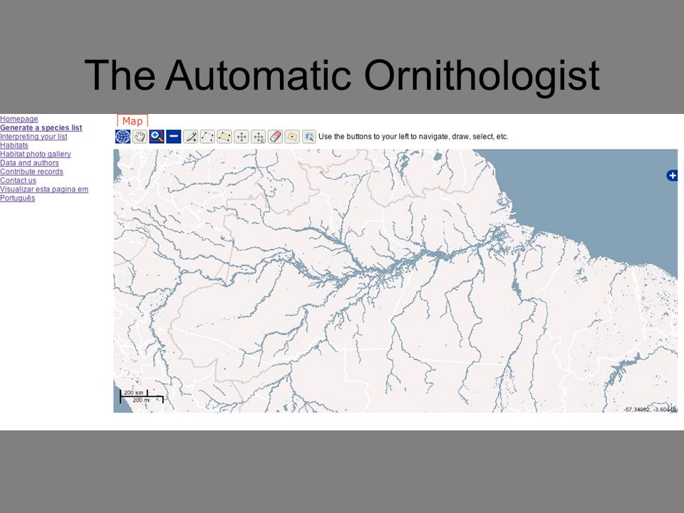 The Automatic Ornithologist