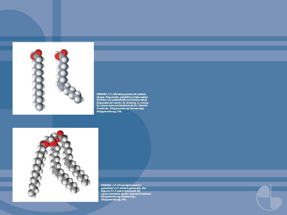 FIGURA 17.1Ácidos graxos de cadeia longa. Esquerda: palmítico (saturado). Direita: cis-palmitoléico (insaturado). Esquema de cores: H, branco; C, cinz