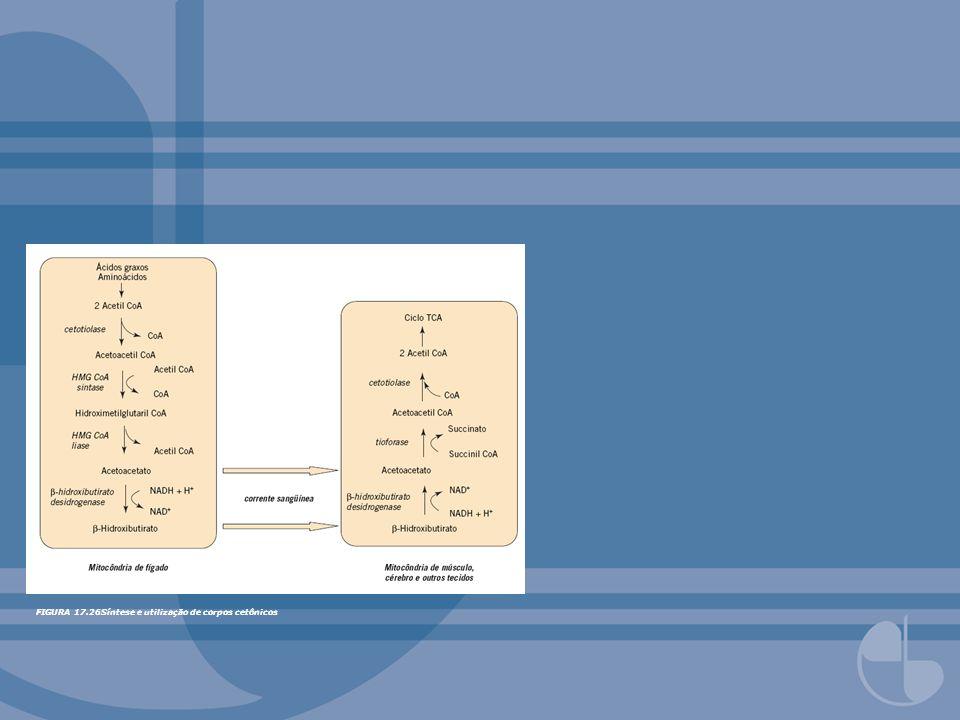 FIGURA 17.26Síntese e utilização de corpos cetônicos