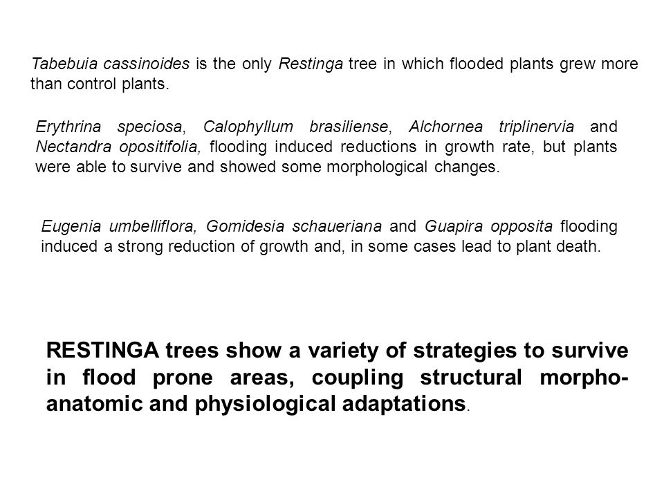 Tabebuia cassinoides is the only Restinga tree in which flooded plants grew more than control plants.