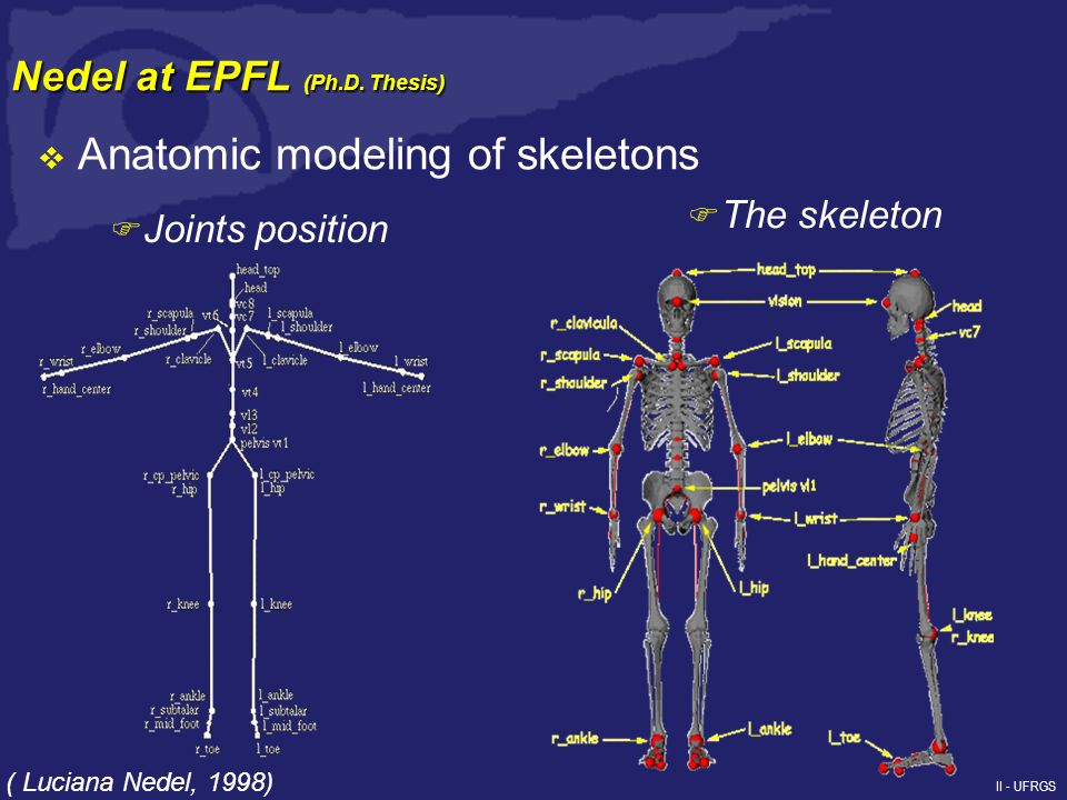 II - UFRGS Anatomic modeling of skeletons F Joints position F The skeleton ( Luciana Nedel, 1998) Nedel at EPFL (Ph.D.