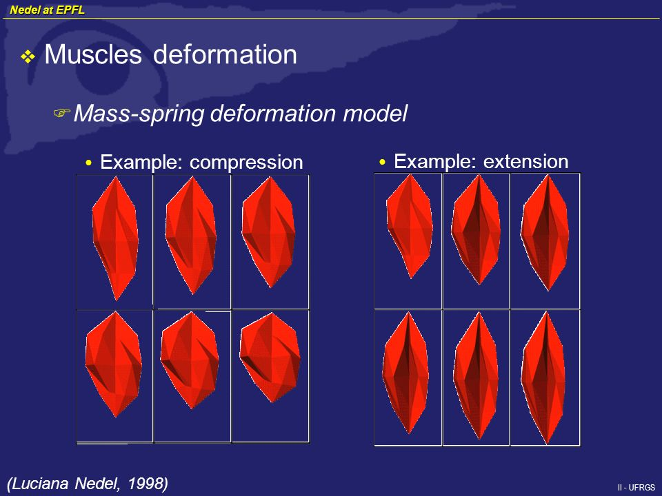 II - UFRGS Muscles deformation F Mass-spring deformation model Example: compression Example: extension (Luciana Nedel, 1998) Nedel at EPFL Nedel at EPFL