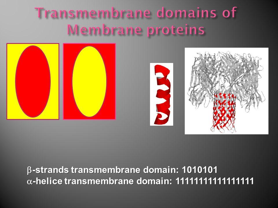 -strands transmembrane domain: 1010101 -strands transmembrane domain: 1010101 -helice transmembrane domain: 11111111111111111 -helice transmembrane domain: 11111111111111111