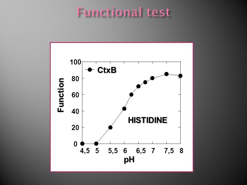 His 0 20 40 60 80 100 4,555,566,577,58 pH CtxB Function HISTIDINE