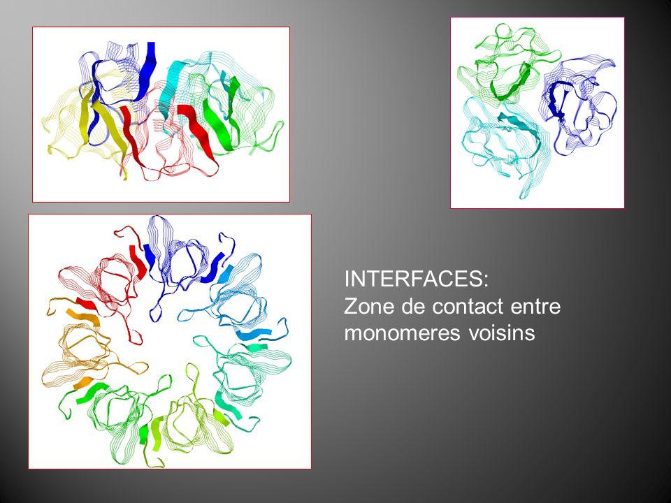 INTERFACES: Zone de contact entre monomeres voisins