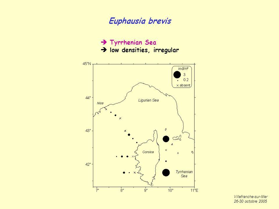 Villefranche-sur-Mer 26-30 octobre 2005 Euphausia brevis Tyrrhenian Sea low densities, irregular