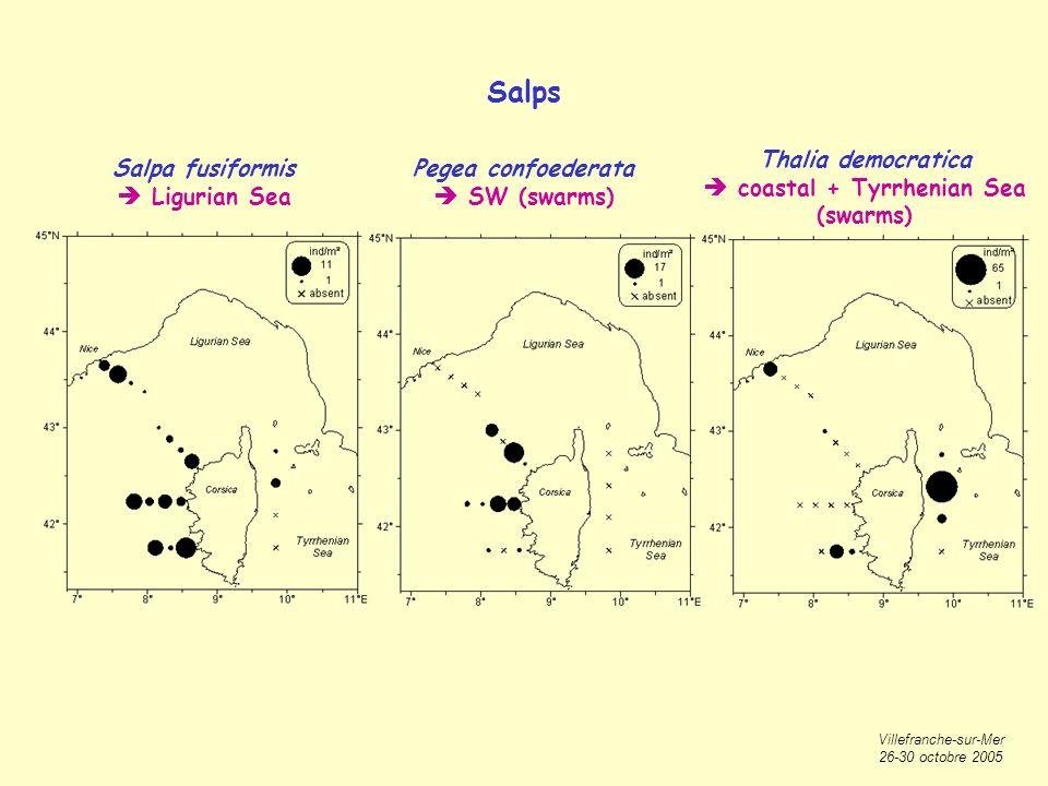 Villefranche-sur-Mer 26-30 octobre 2005 Salps Salpa fusiformis Ligurian Sea Pegea confoederata SW (swarms) Thalia democratica coastal + Tyrrhenian Sea (swarms)