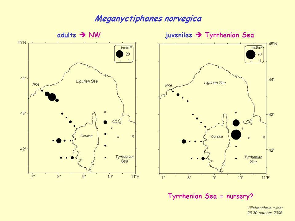 Villefranche-sur-Mer 26-30 octobre 2005 Meganyctiphanes norvegica adults NWjuveniles Tyrrhenian Sea Tyrrhenian Sea = nursery?