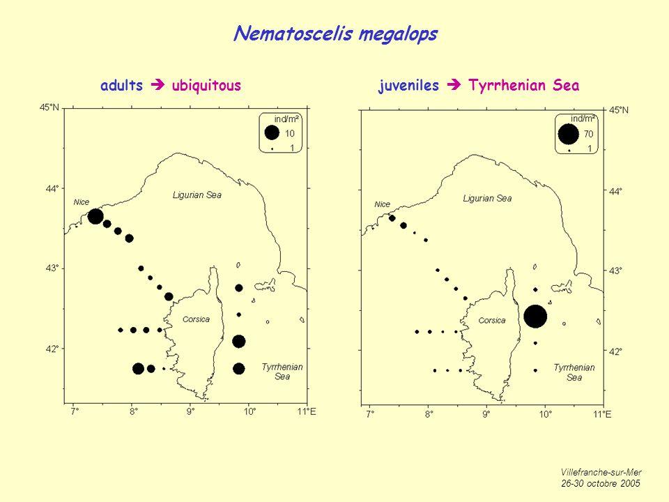 Villefranche-sur-Mer 26-30 octobre 2005 Nematoscelis megalops adults ubiquitousjuveniles Tyrrhenian Sea