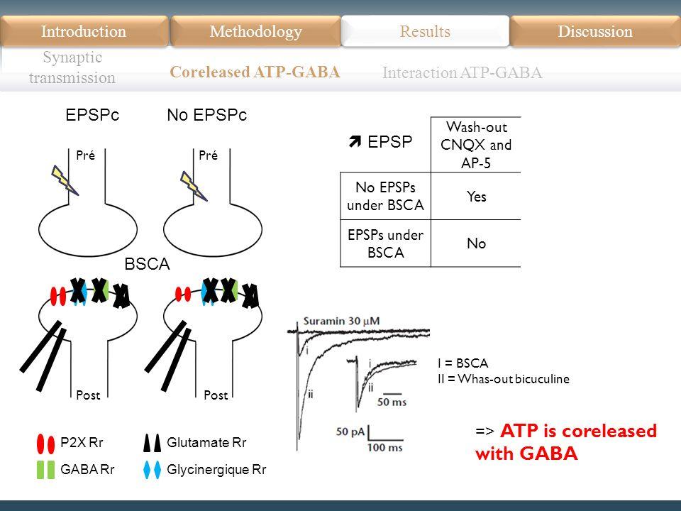 Pré Post Pré Post P2X Rr GABA Rr Glutamate Rr Glycinergique Rr Introduction Méthodologie Modèle Données actuelles Résultats Discussion Résumé Introduction Methodology Synaptic transmission Results Discussion Coreleased ATP-GABA Wash-out CNQX and AP-5 Wash-out bicuculine No EPSPs under BSCA Yes EPSPs under BSCA NoYes I = BSCA II = Whas-out bicuculine => ATP is coreleased with GABA EPSPcNo EPSPc Interaction ATP-GABA BSCA EPSP