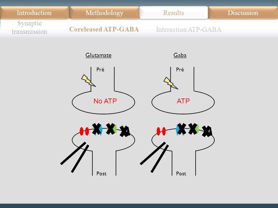 Introduction Méthodologie Modèle Données actuelles Résultats Discussion Résumé Introduction Methodology Synaptic transmission Results Discussion Coreleased ATP-GABA Pré Post Glutamate No ATP Pré Post Gaba ATP Interaction ATP-GABA
