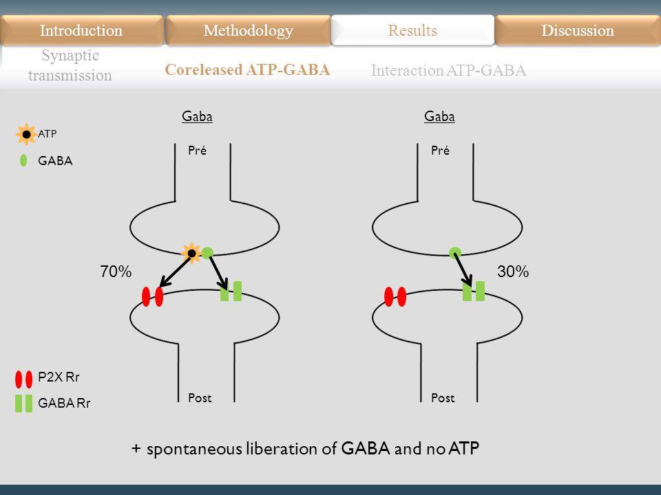 Introduction Méthodologie Modèle Données actuelles Résultats Discussion Résumé Introduction Methodology Synaptic transmission Results Discussion Coreleased ATP-GABA Pré Post Gaba Pré Post Gaba 70%30% Interaction ATP-GABA P2X Rr GABA Rr GABA ATP + spontaneous liberation of GABA and no ATP
