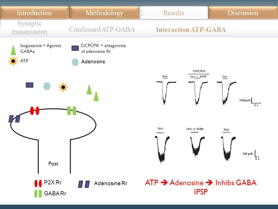 Introduction Méthodologie Modèle Données actuelles Résultats Discussion Résumé Introduction Methodology Synaptic transmission Results Discussion Coreleased ATP-GABA Interaction ATP-GABA Post Isoguvacine = Agonist GABAa DCPCPX = antagoniste of adenosine Rr Adenosine ATP P2X Rr GABA Rr Adenosine Rr ATP Adenosine Inhibs GABA IPSP