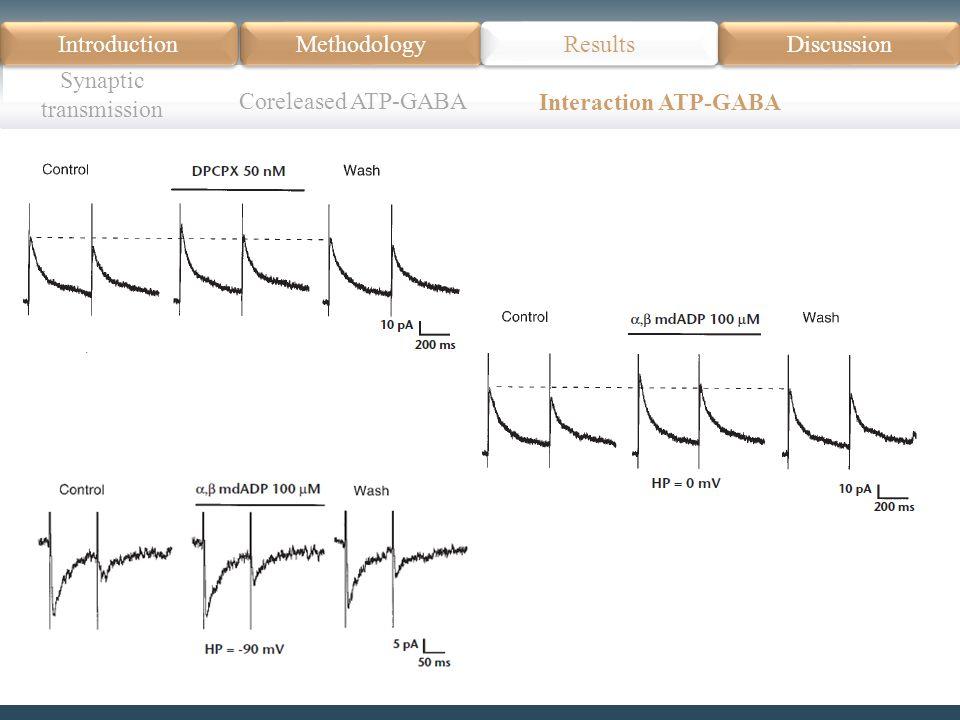 Introduction Méthodologie Modèle Données actuelles Résultats Discussion Résumé Introduction Methodology Synaptic transmission Results Discussion Coreleased ATP-GABA Interaction ATP-GABA