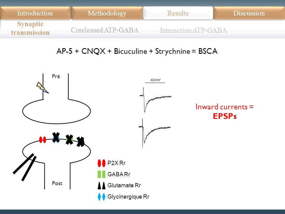Introduction Méthodologie Modèle Données actuelles Résultats Discussion Résumé Introduction Methodology Synaptic transmission Results Discussion AP-5 + CNQX + Bicuculine + Strychnine = BSCA Coreleased ATP-GABA P2X Rr GABA Rr Glutamate Rr Glycinergique Rr Pré Post Inward currents = EPSPs -60mV Interaction ATP-GABA