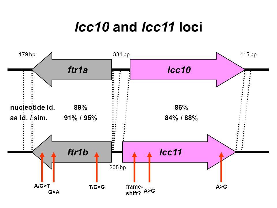 ftr1a ftr1blcc11 lcc10 lcc10 and lcc11 loci nucleotide id.89%86% aa id. / sim.91% / 95%84% / 88% frame- shift? A>G T/C>G G>A A/C>T 331 bp115 bp179 bp