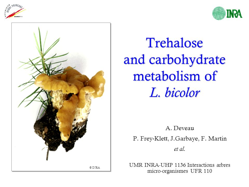 Trehalose and carbohydrate metabolism of L.bicolor A.
