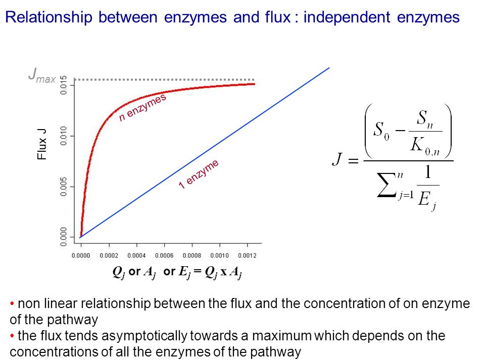 Flux J Q j or A j or E j = Q j x A j J max n enzymes 1 enzyme Relationship between enzymes and flux : independent enzymes non linear relationship betw