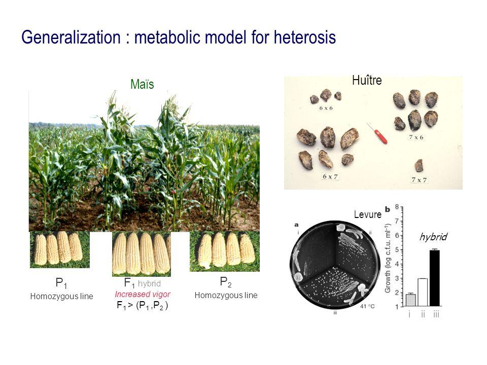 Generalization : metabolic model for heterosis i ii iii hybrid Levure Huître P 1 Homozygous line Maïs F 1 hybrid Increased vigor F 1 > (P 1,P 2 ) P 2