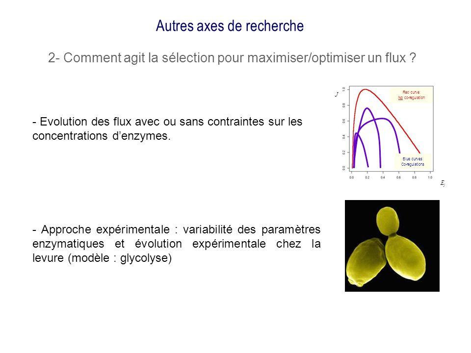 Autres axes de recherche 2- Comment agit la sélection pour maximiser/optimiser un flux ? - Approche expérimentale : variabilité des paramètres enzymat