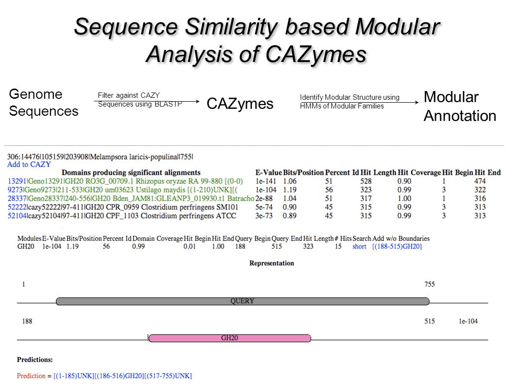 Sequence Similarity based Modular Analysis of CAZymes Genome Sequences Filter against CAZY Sequences using BLASTP CAZymes Identify Modular Structure using HMMs of Modular Families Modular Annotation
