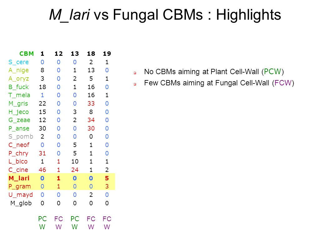 M_lari vs Fungal CBMs : Highlights No CBMs aiming at Plant Cell-Wall ( PCW ) Few CBMs aiming at Fungal Cell-Wall (FCW) CBM112131819 S_cere00021 A_nige801130 A_oryz30251 B_fuck1801160 T_mela100161 M_gris2200330 H_jeco150380 G_zeae1202340 P_anse3000 0 S_pomb20000 C_neof00510 P_chry310510 L_bico111011 C_cine4612412 M_lari01005 P_gram01003 U_mayd00020 M_glob00000 PC W FC W PC W FC W