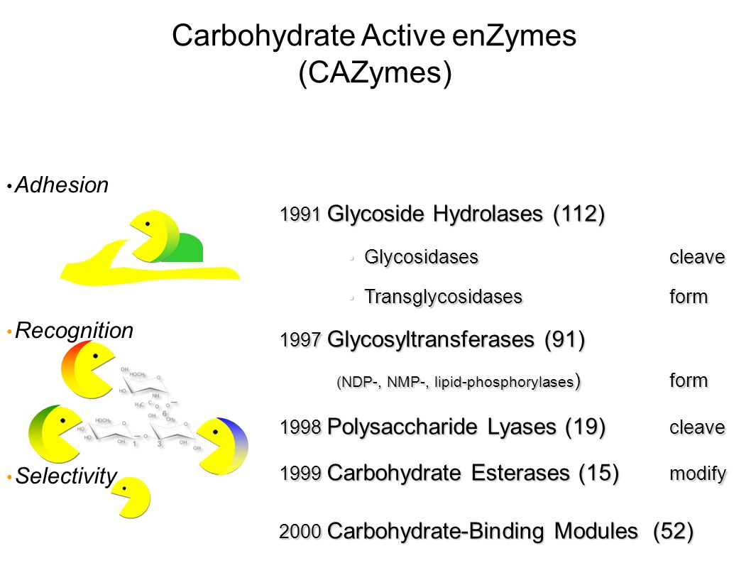 1991 Glycoside Hydrolases (112) Glycosidases cleave Glycosidases cleave Transglycosidases form Transglycosidases form 1997 Glycosyltransferases (91) (NDP-, NMP-, lipid-phosphorylases )form 1998 Polysaccharide Lyases (19) cleave 1999 Carbohydrate Esterases (15) modify 2000 Carbohydrate-Binding Modules (52) Carbohydrate Active enZymes (CAZymes) Adhesion Recognition Selectivity
