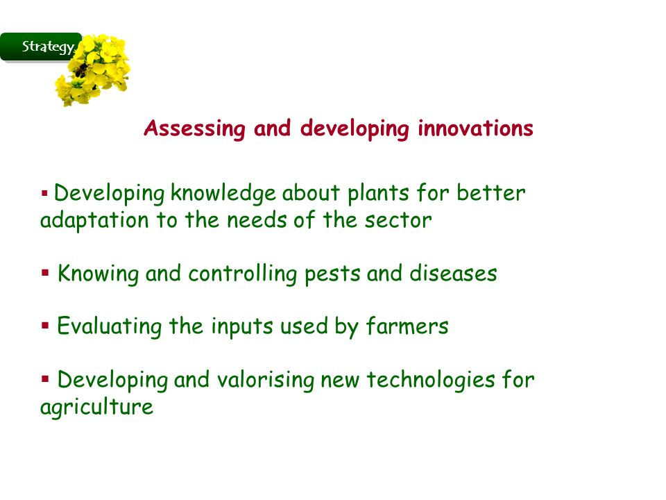 Strategy Assessing and developing innovations Developing knowledge about plants for better adaptation to the needs of the sector Knowing and controlling pests and diseases Evaluating the inputs used by farmers Developing and valorising new technologies for agriculture