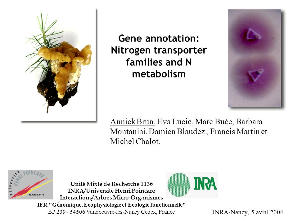 Gene annotation: Nitrogen transporter families and N metabolism Annick Brun, Eva Lucic, Marc Buée, Barbara Montanini, Damien Blaudez, Francis Martin e
