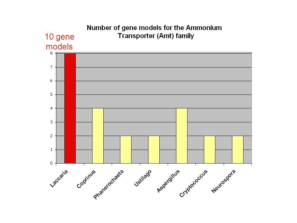 10 gene models