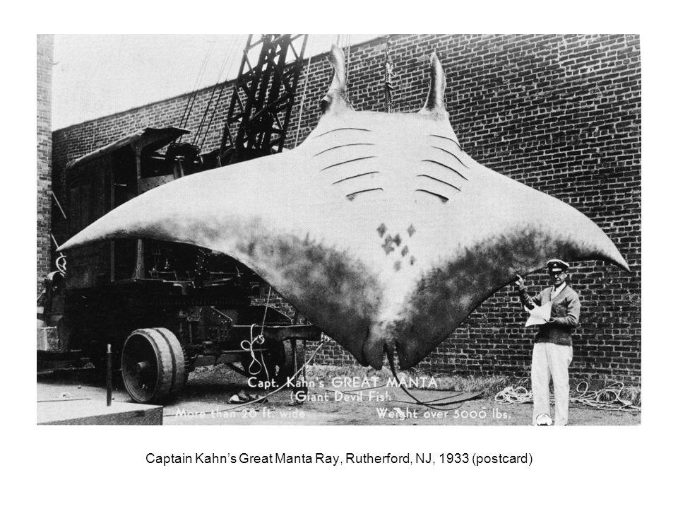 Captain Kahns Great Manta Ray, Rutherford, NJ, 1933 (postcard)