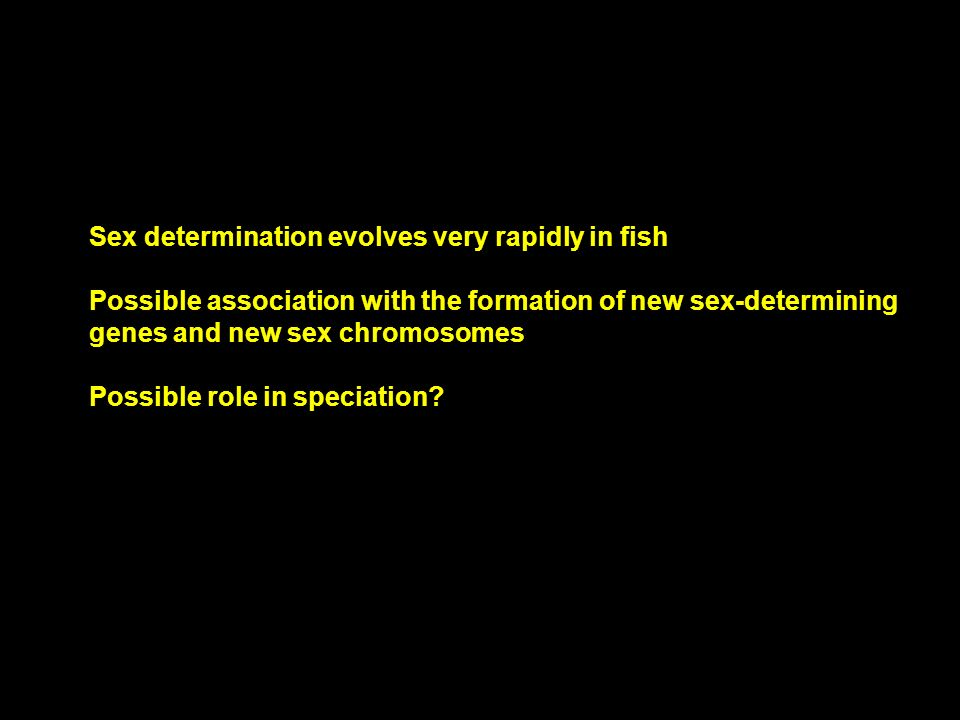 Sex determination evolves very rapidly in fish Possible association with the formation of new sex-determining genes and new sex chromosomes Possible r