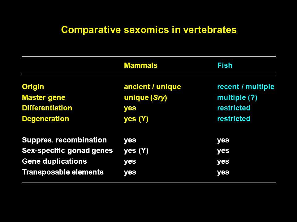 Comparative sexomics in vertebrates MammalsFish Originancient / uniquerecent / multiple Master geneunique (Sry)multiple (?) Differentiationyesrestrict