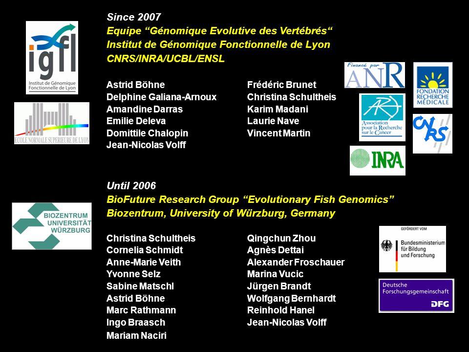 Since 2007 Equipe Génomique Evolutive des Vertébrés Institut de Génomique Fonctionnelle de Lyon CNRS/INRA/UCBL/ENSL Astrid BöhneFrédéric Brunet Delphi
