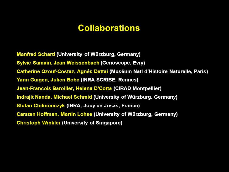 Collaborations Manfred Schartl (University of Würzburg, Germany) Sylvie Samain, Jean Weissenbach (Genoscope, Evry) Catherine Ozouf-Costaz, Agnés Detta