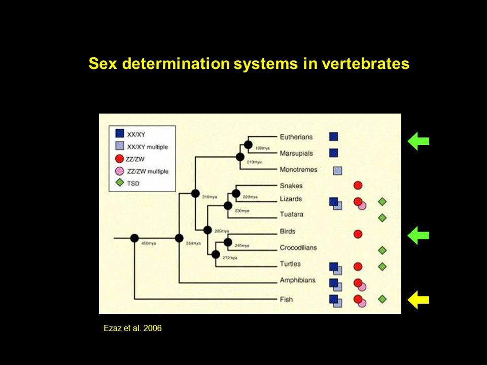 Sex determination systems in vertebrates Ezaz et al. 2006