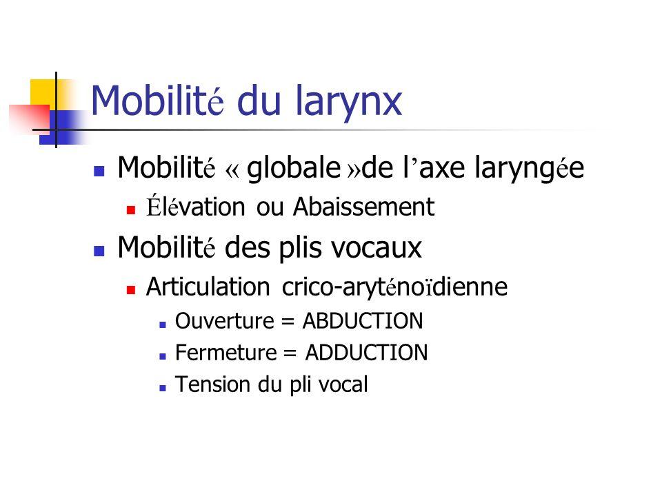 Mobilit é du larynx Mobilit é « globale » de l axe laryng é e É l é vation ou Abaissement Mobilit é des plis vocaux Articulation crico-aryt é no ï die