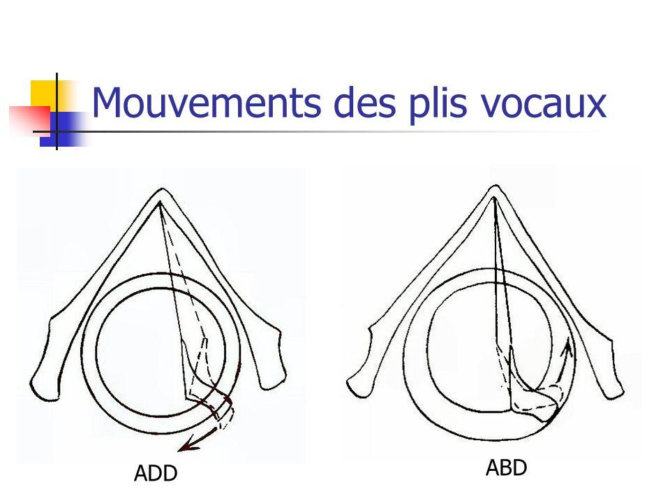 Mouvements des plis vocaux ADD ABD