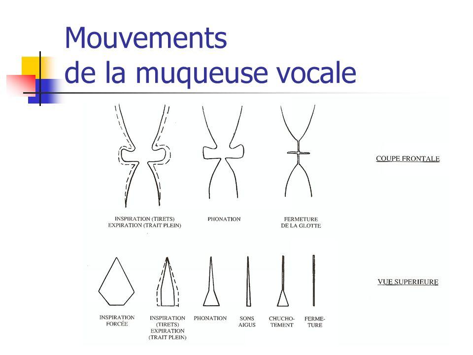 Mouvements de la muqueuse vocale