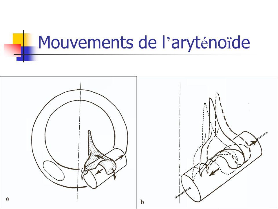 Mouvements de l aryt é no ï de